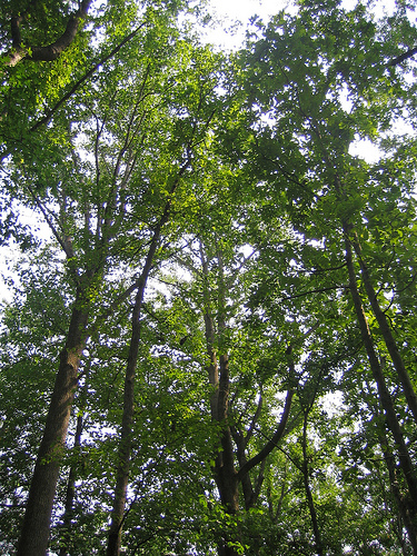 [Webcast] Urban Tree Canopy and Forest Planting : urban tree canopy - memphite.com