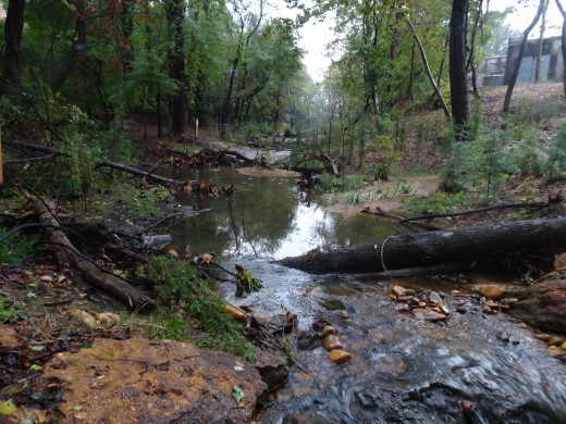 Cabin Branch Stream Restoration