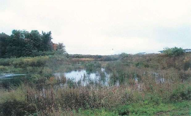 Design Specification No 13: Constructed Wetlands