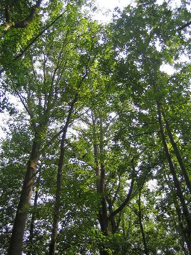 [Webcast] Urban Tree Canopy and Forest Planting