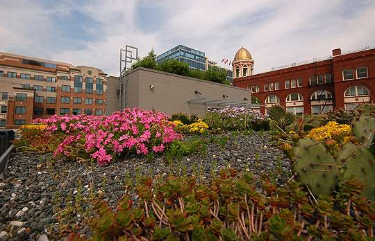 D.C., National Leader for Green Roof Installation in 2011