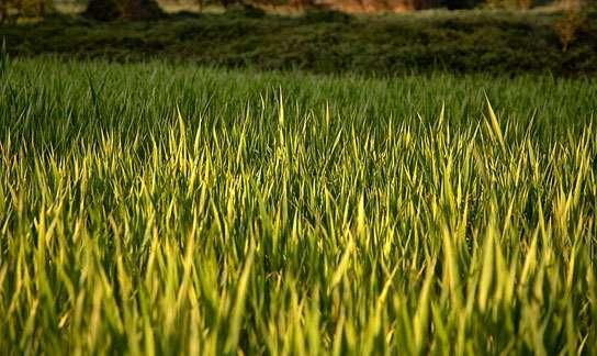 Trimming Back Lawn Fertilizer Pollution Podcast