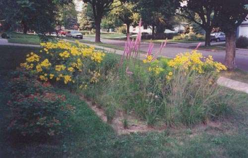 Are Rain Gardens Mini Toxic Cleanup Sites?