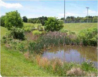 [Webcast] Advanced Stormwater Design: Constructed Wetlands