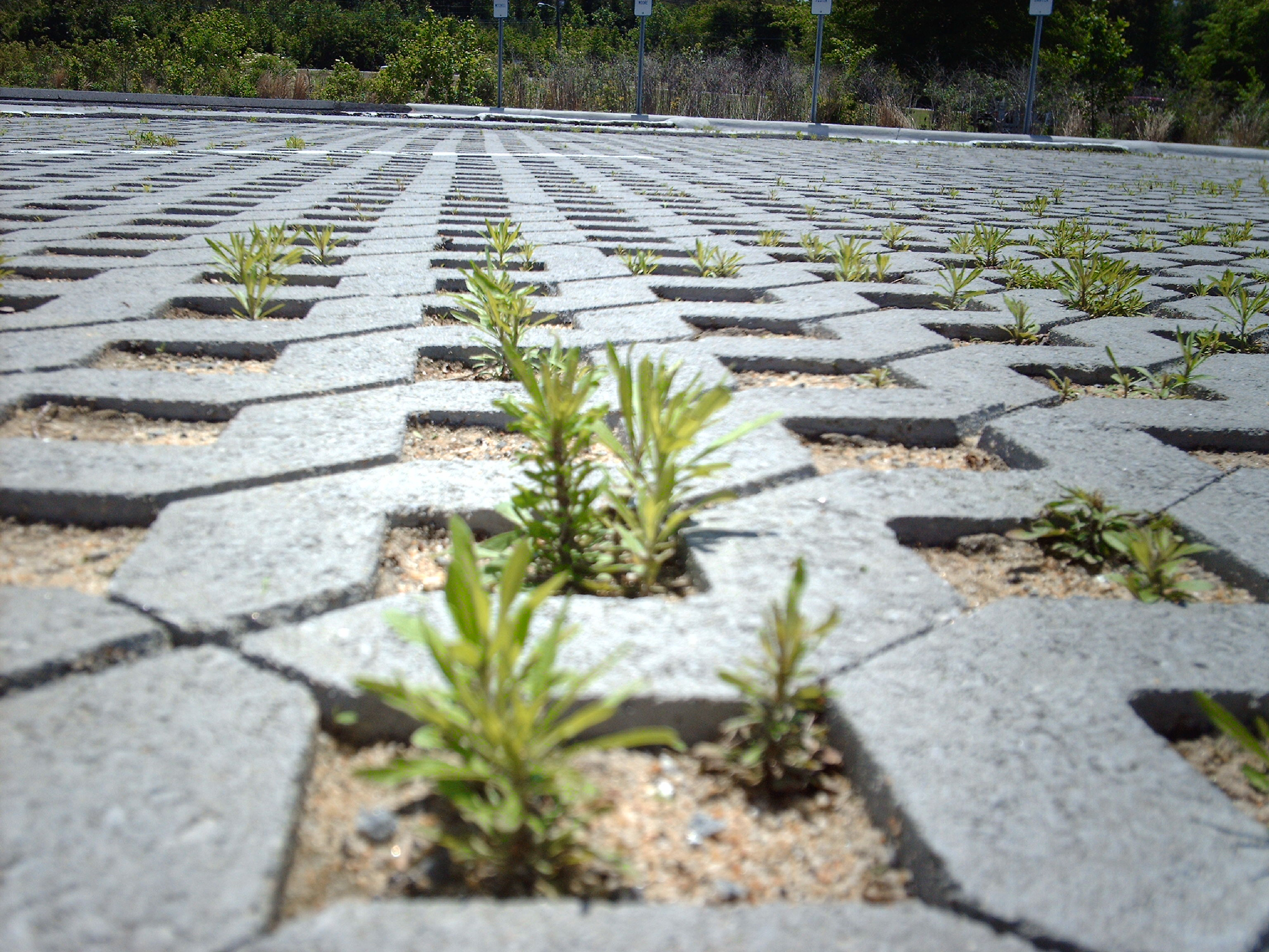 [Webcast] Advanced Stormwater Design: Permeable Pavement