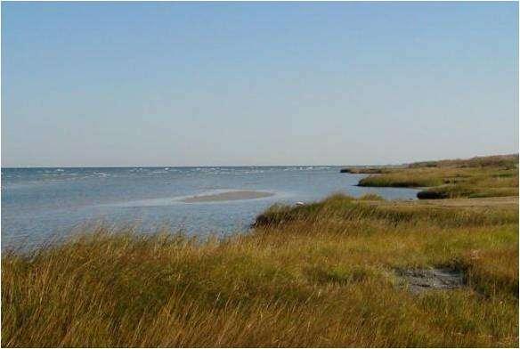 Shoreline Management