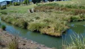 Floating Treatment Wetland