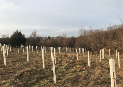 """Stormwater """"Roots"""" Part 1: Reforestation"""
