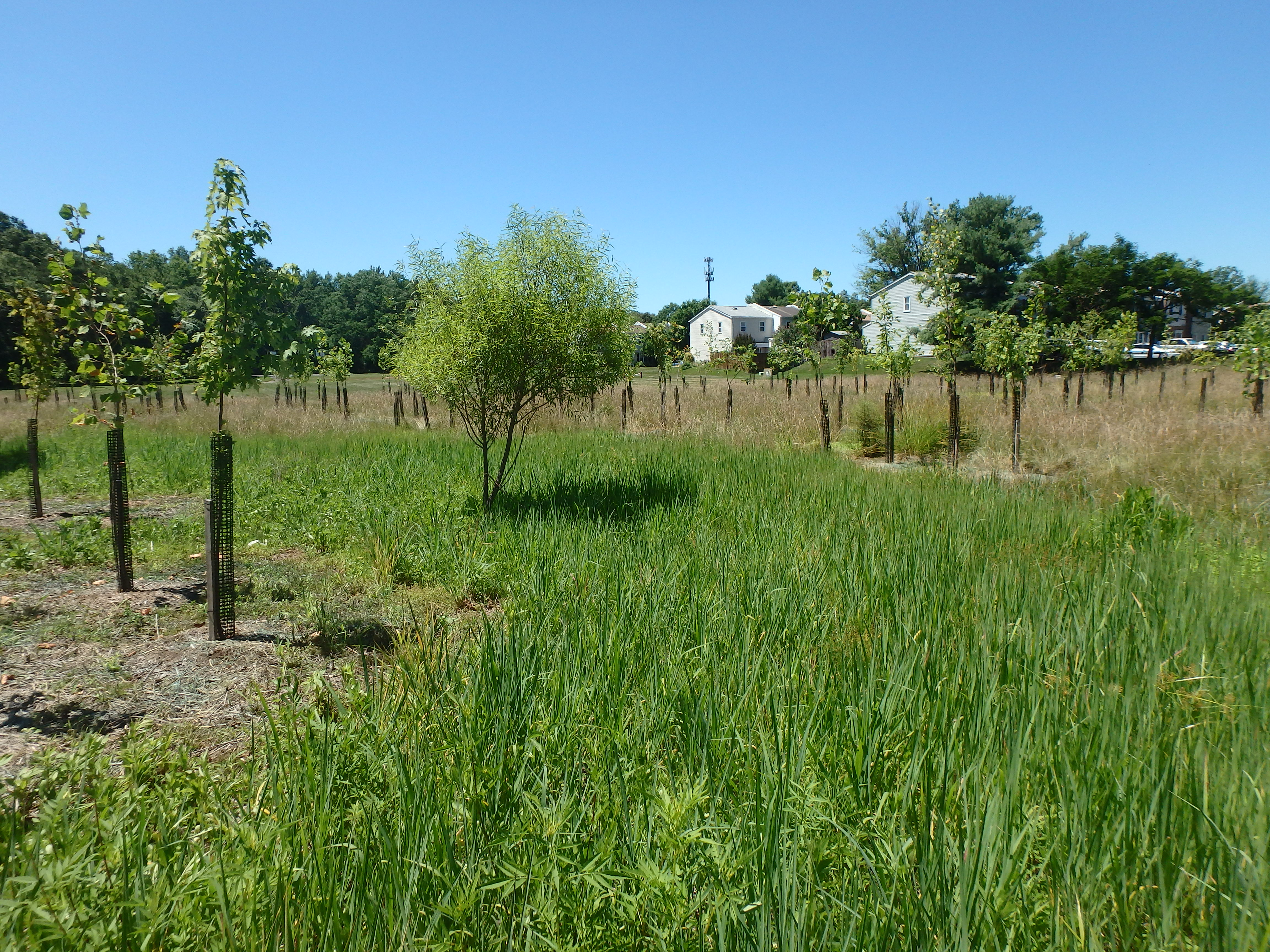 "Stormwater ""Roots"" Part 3: Finding the Right Tree BMP"