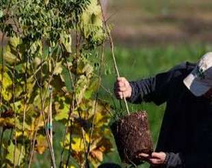 Watershed Hacks: Planting Trees For Your Kids Future Canopy
